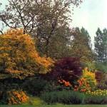 alberi da giardino colorati