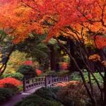 come posizionare gli alberi in giardino