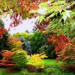 quali alberi piantare in giardino