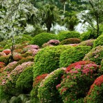 Cespugli fioriti in giardino