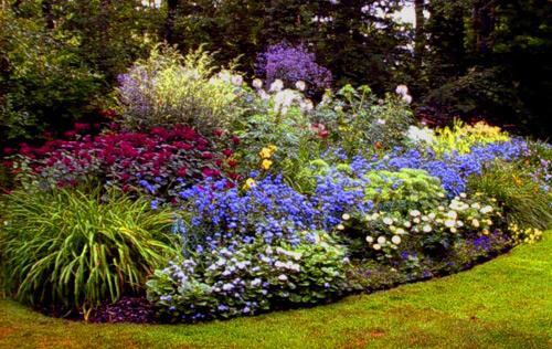 Piante da giardino con fiori piante da giardino piante con