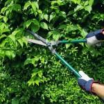 potare siepe giardino