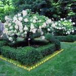 Siepe che circonda un albero in giardino