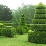 topiarie in loco nel giardino