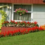 fiori piante giardino