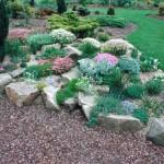 Fiore e piante tra le pietre del giardino