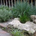 Piante tra le pietre di un giardino roccioso